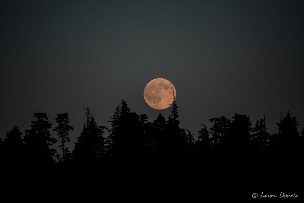 cannerycove_moon-2084