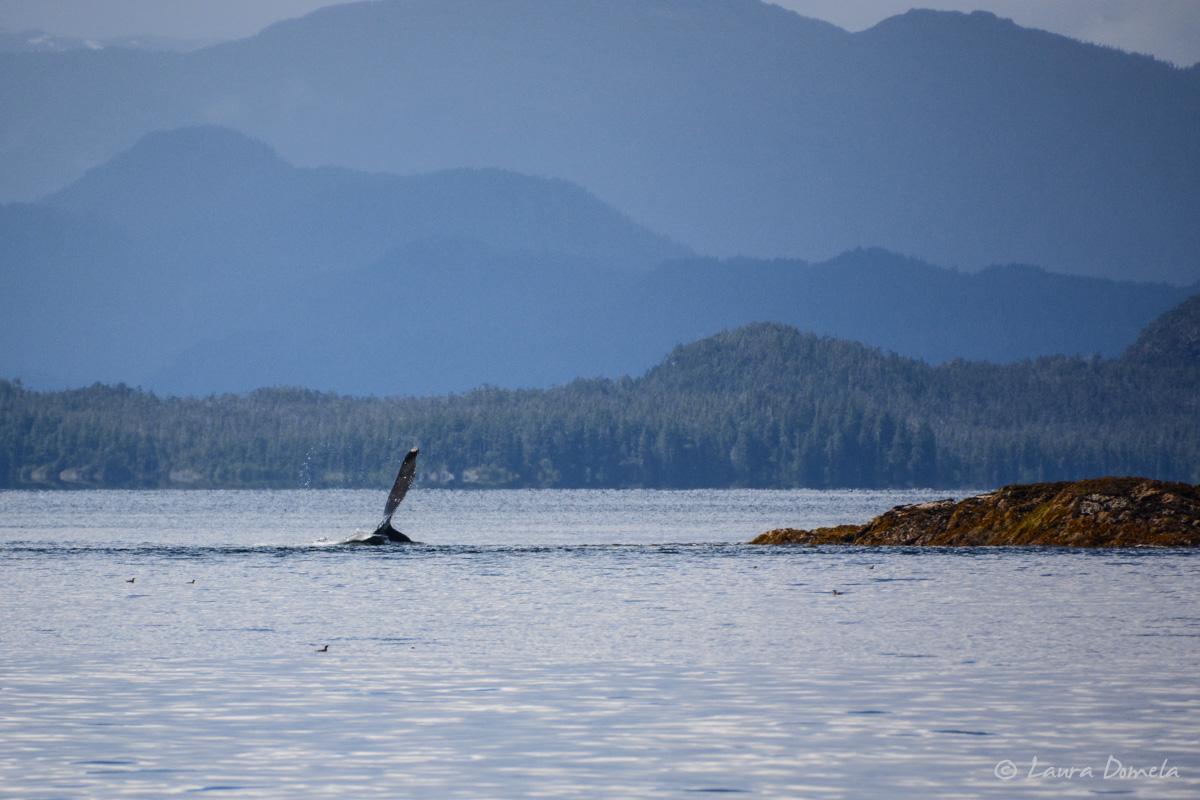 whalesdolphins-1799