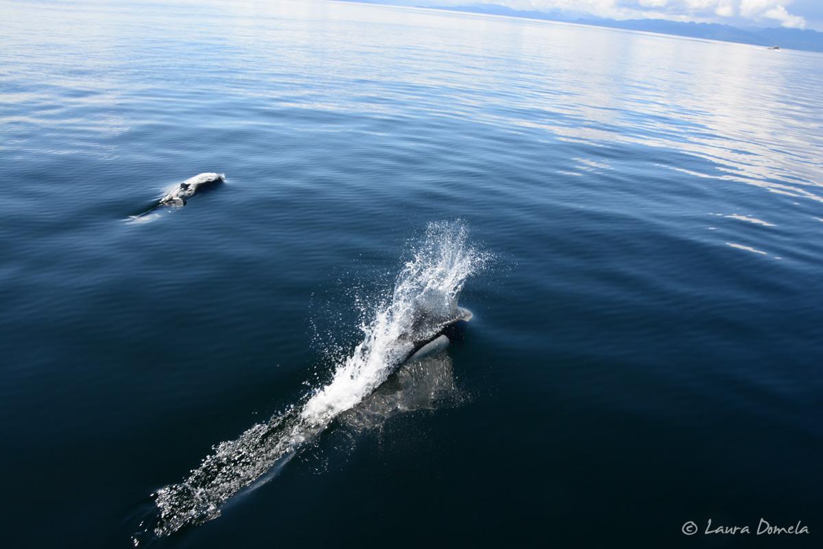 whalesdolphins-1819