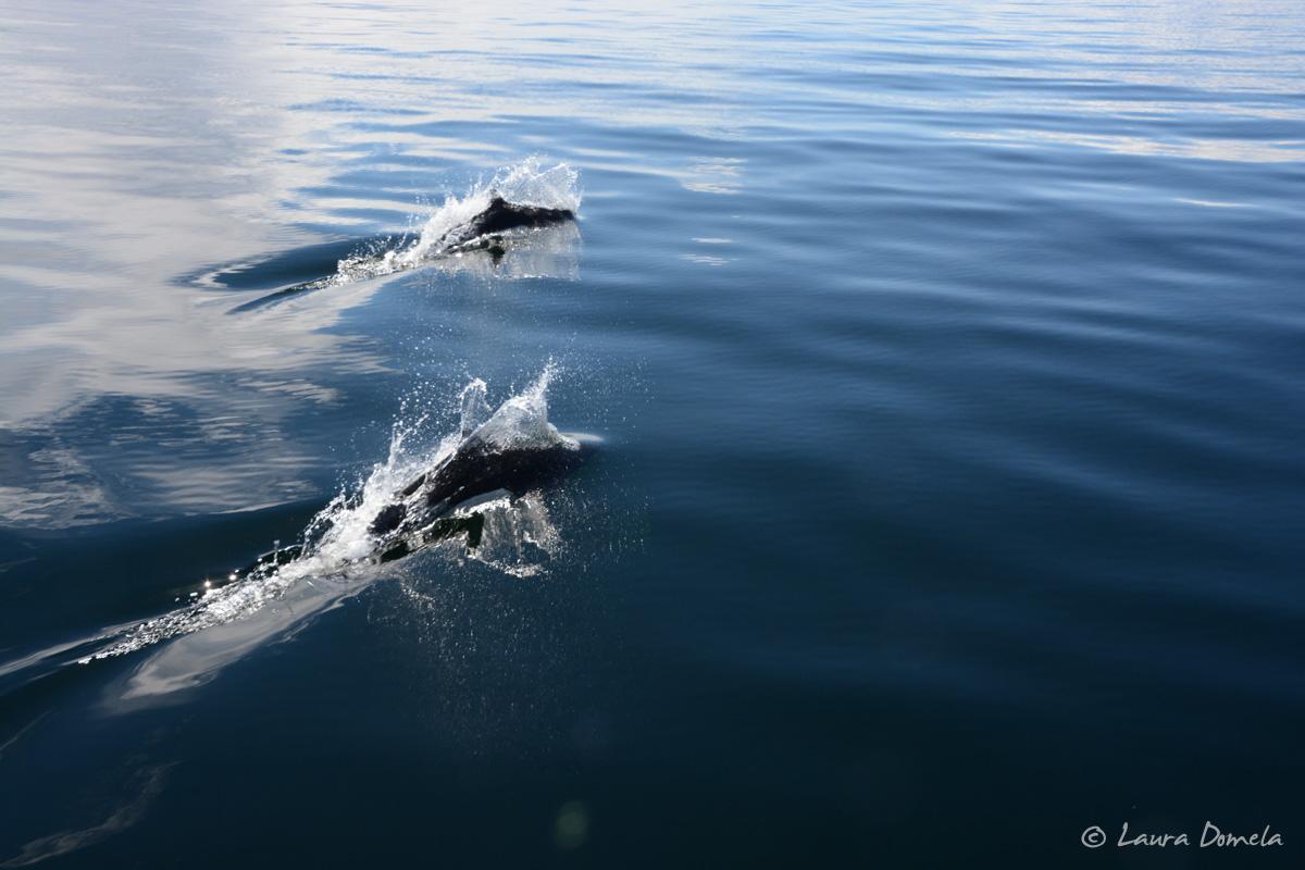 whalesdolphins-1827