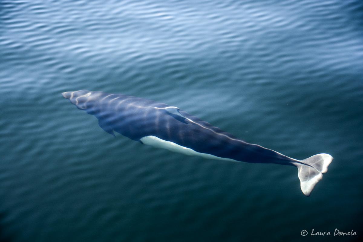 whalesdolphins-1829