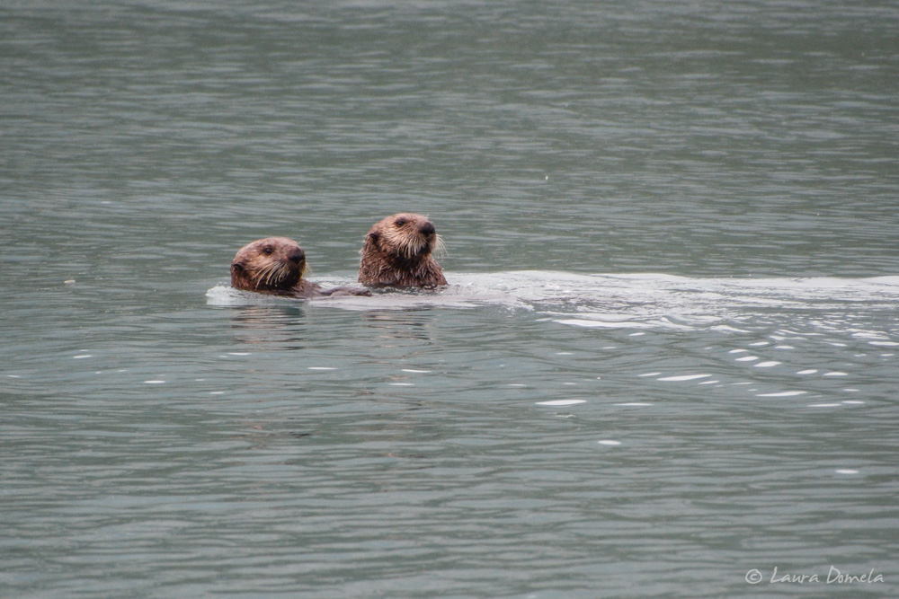 GBNP_otters-3830